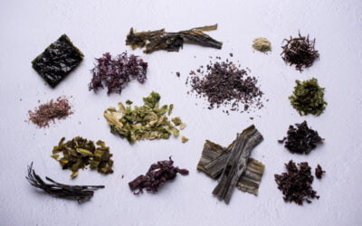 Get To Know Your Sea Vegetables