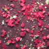 raspberry rainbow seaweed - dark chocolate - closeup (2)